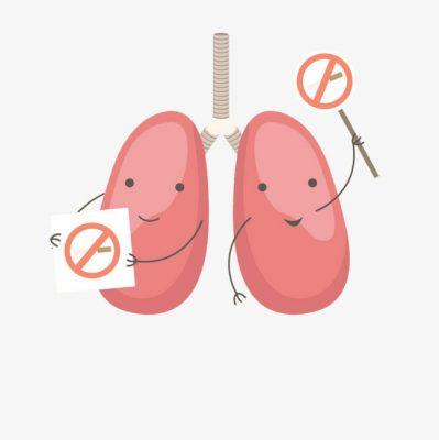 bột trái nhàu khô phòng chống bệnh phổi