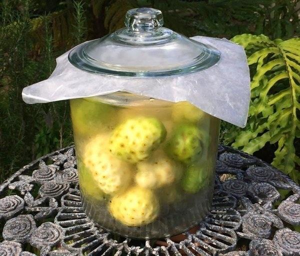 ngâm rượu trái nhàu khô