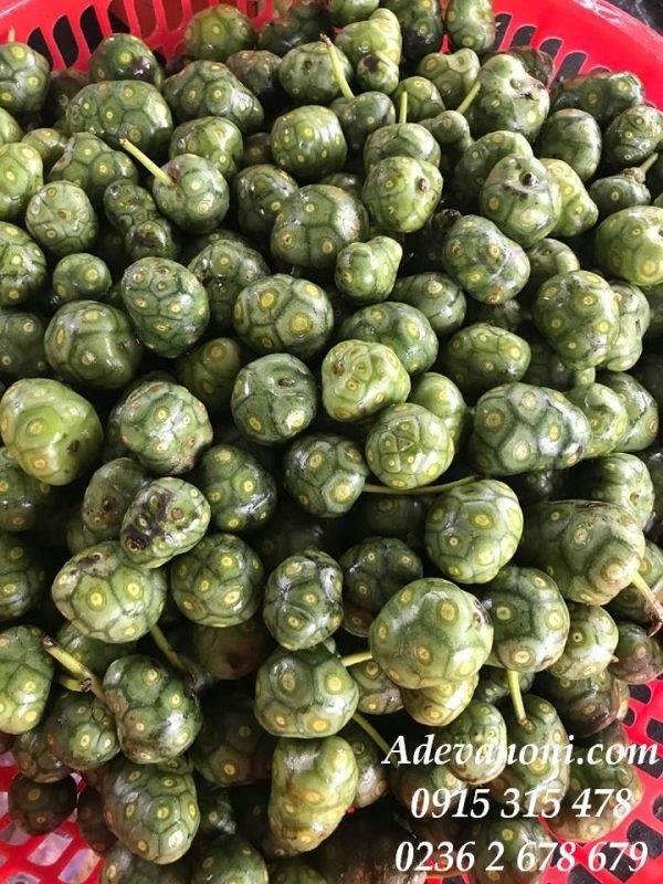 trái nhàu ngâm mật ong (4)