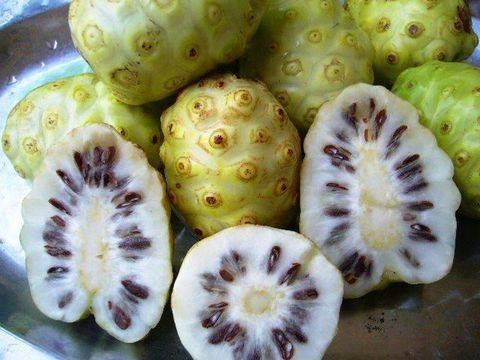 trái nhàu ngâm mật ong (6)