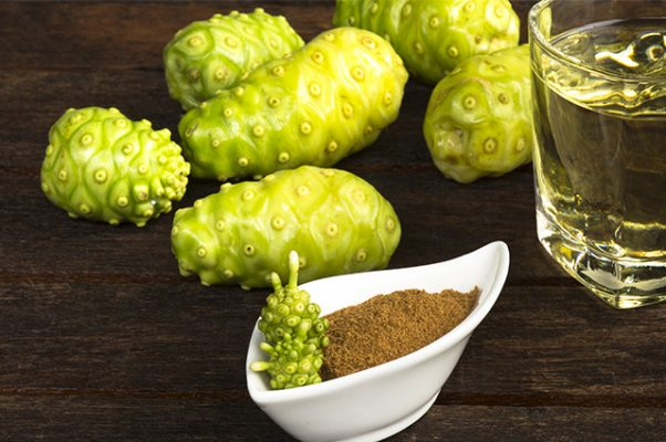 trái nhàu trị bệnh gout (10)